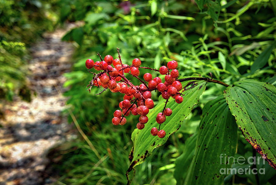 Nature Photograph - Mountain Berries by James Foshee