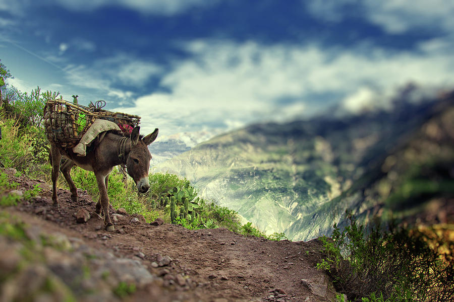 Mountain Donkey Photograph by By Kim Schandorff