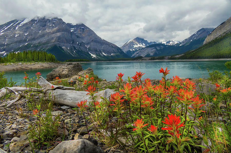 mountain flora by David Brookwell