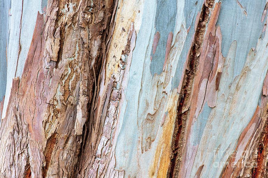 Mountain Gum Bark by Tim Gainey