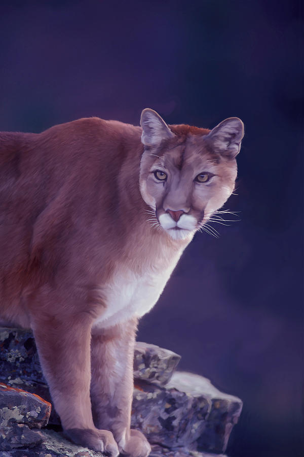 Mountain Lion in the Rockies by Mark Miller