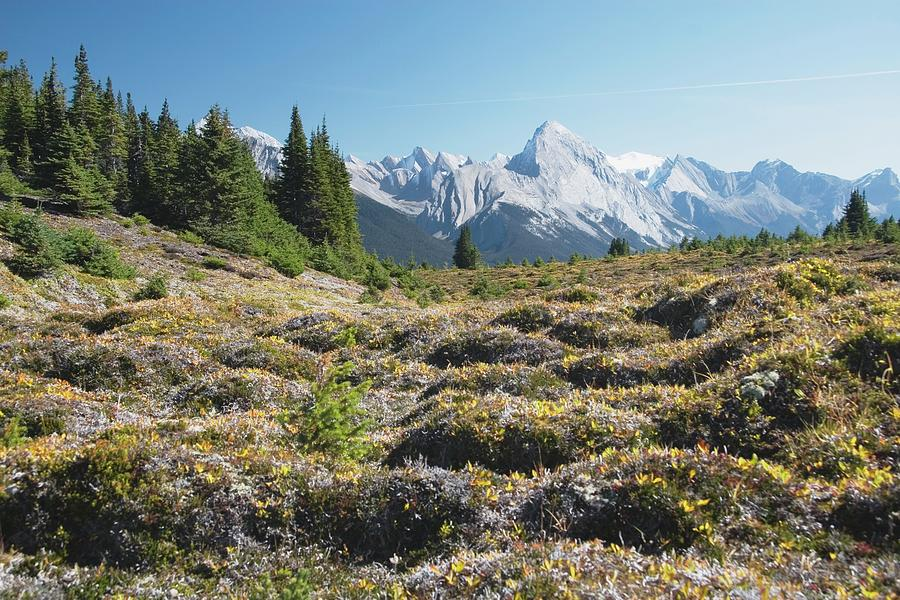 Mountain Meadow And Mountains, Jasper Photograph by Design Pics / Michael Interisano