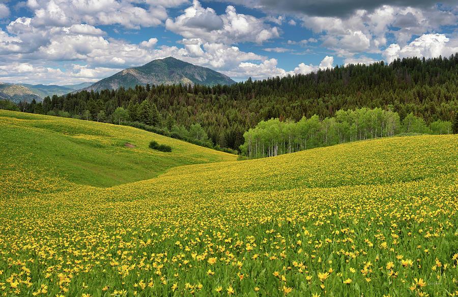 Idaho Photograph - Mountain Of Color by Leland D Howard
