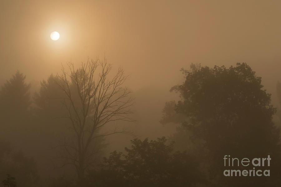 Mountain Sunrise Misty Morning by Thomas R Fletcher