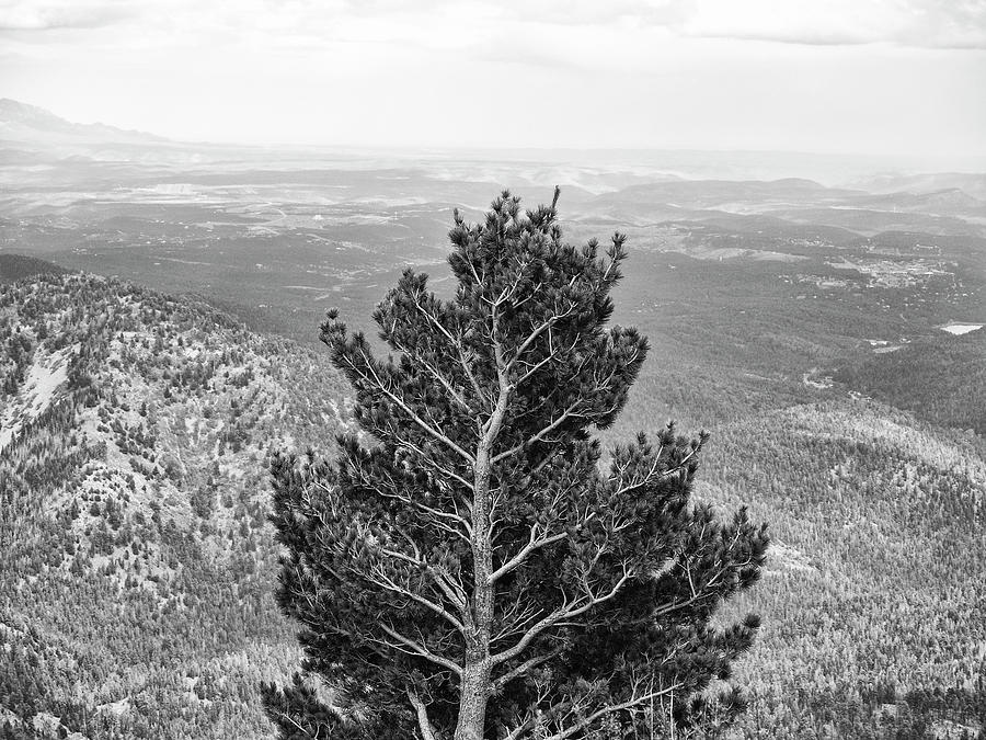 Mountain Tree with a View by Keith Dotson