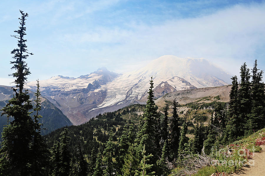 mountain vista by Sylvia Cook