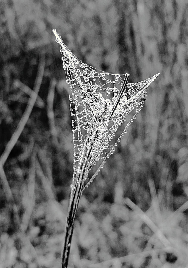 Mountain Web Dew by Ally White