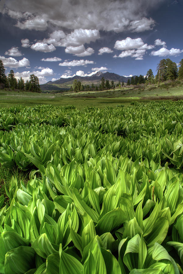 Pagosa Springs Co Photograph - Mountain wetland by Mark Langford