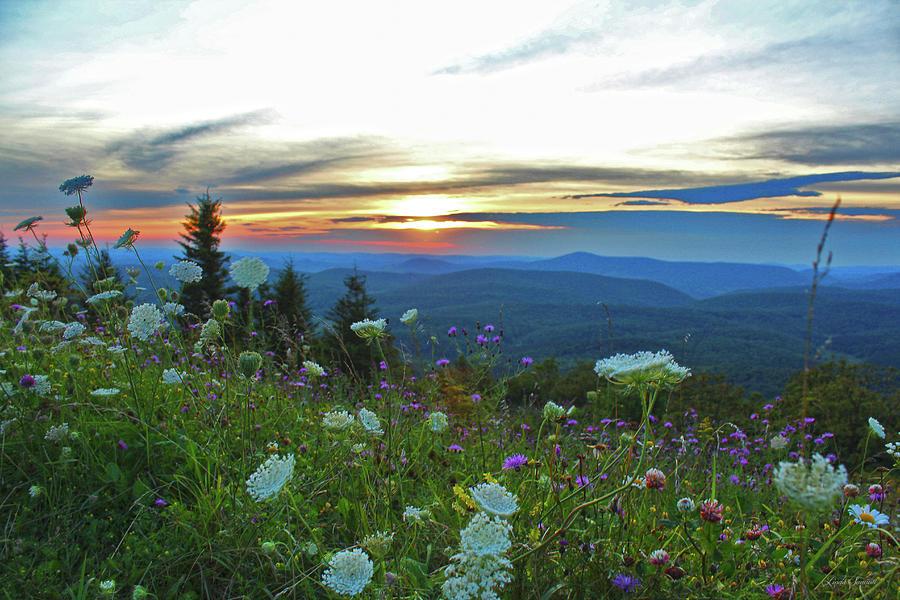 Mountain Wildflowers by Linda Sannuti