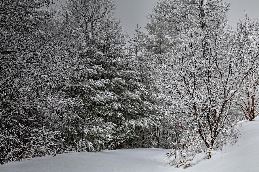 Mountains Winter Drive by Carol Montoya