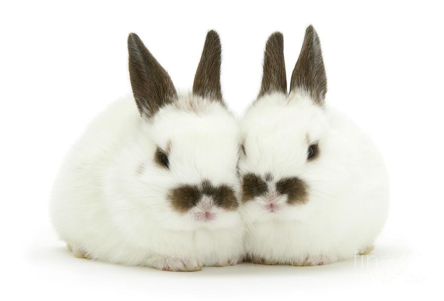 Moustachioed Love Bunnies by Warren Photographic