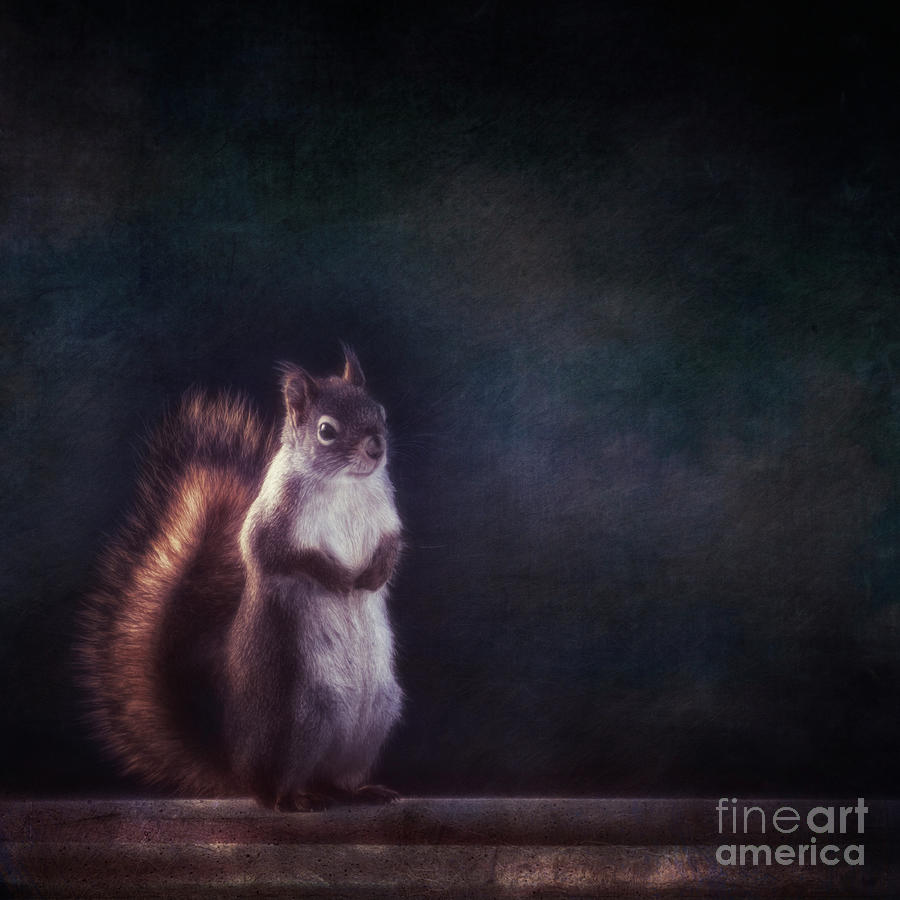 Rodent Photograph - Mr. Squirrel by Priska Wettstein
