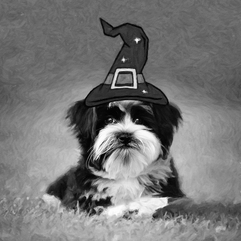 Mr. Wizard by Sue Collura