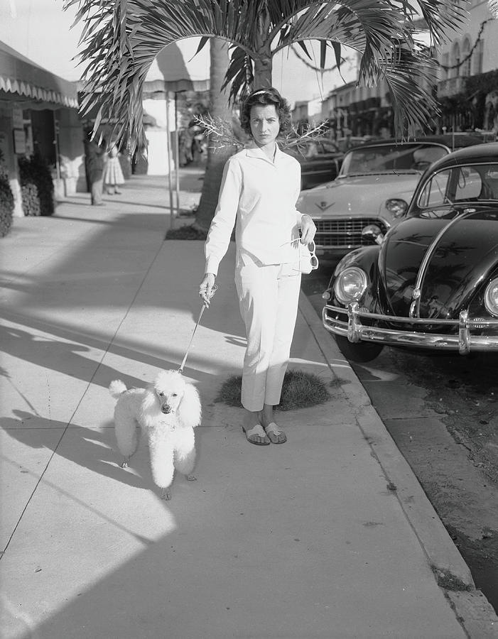 Mrs. Wrightsman Walks Her Poodle Photograph by Bert Morgan