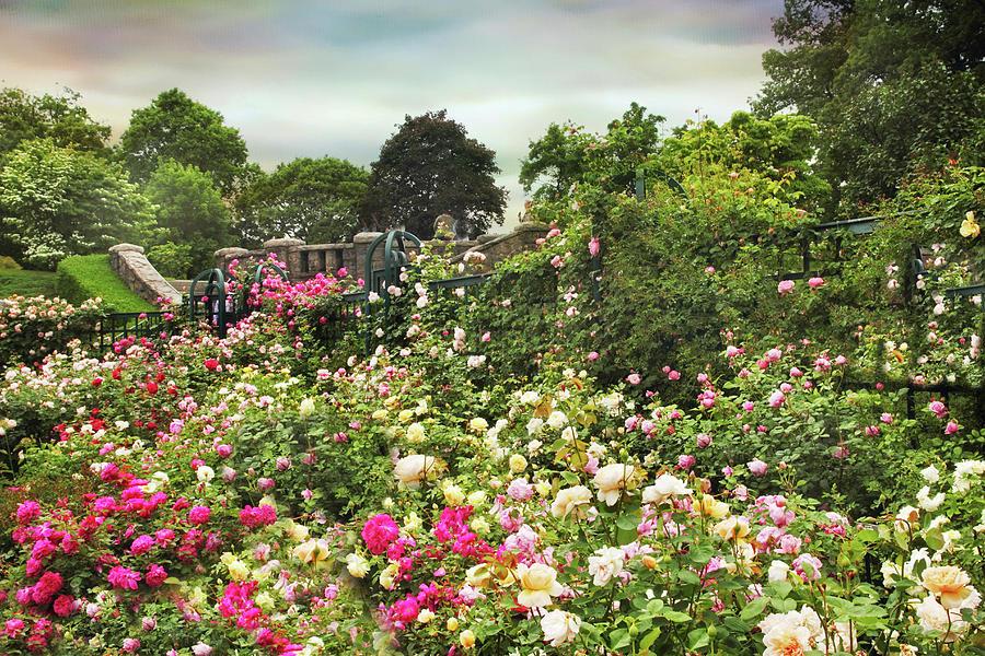 Rose Garden Photograph - Replendent Rose Garden by Jessica Jenney