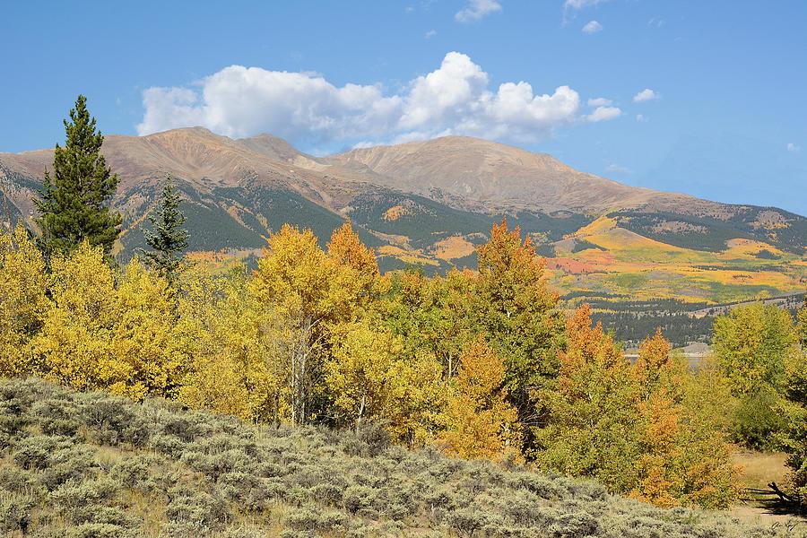 Elbert Photograph - Mt. Elbert Autumn by Aaron Spong