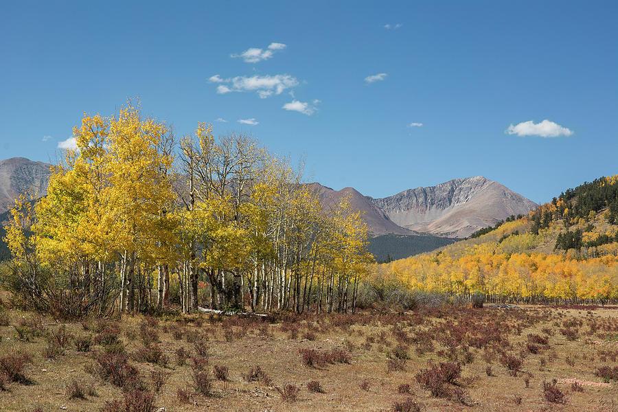 Mt. Guyot Autumn by Aaron Spong