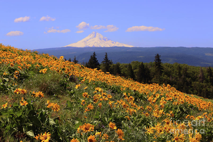 Mt. Hood, Rowena Crest by Jeanette French
