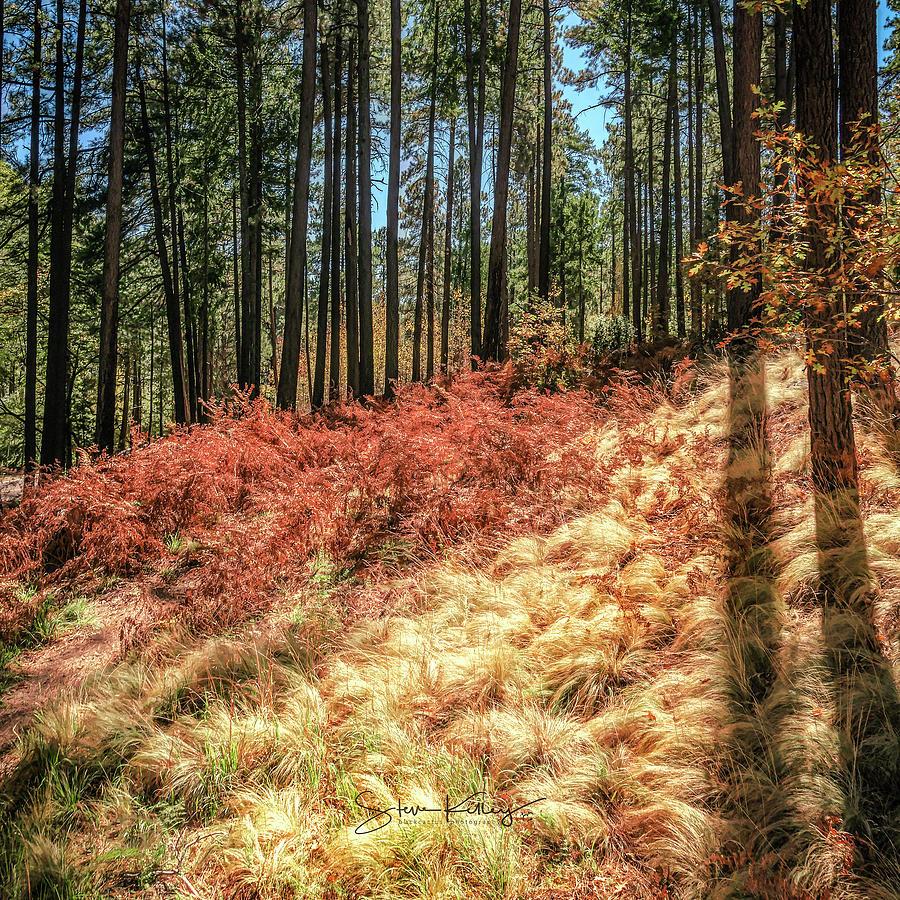 Mt. Lemmon Autumn by Steve Kelley