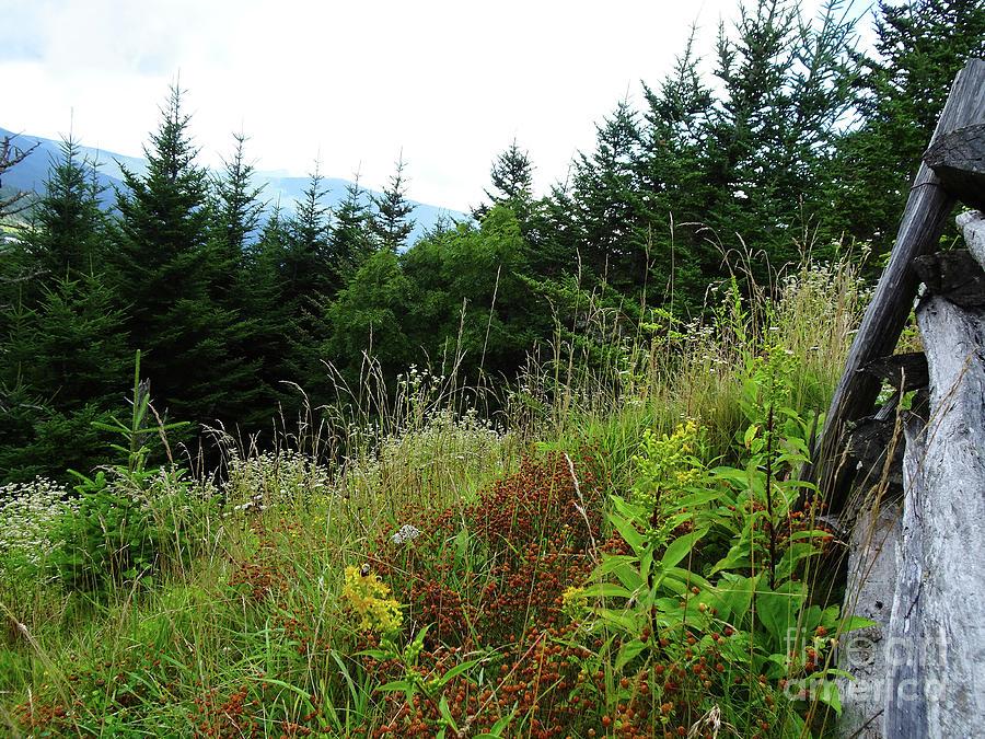 Mt. Mitchel 3 by Eunice Warfel
