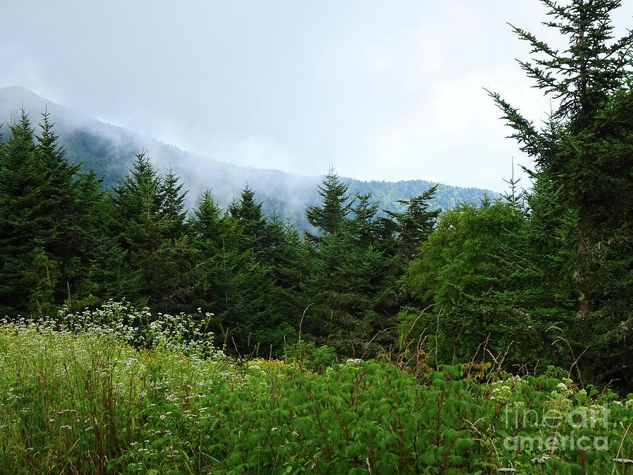 Mt Mitchell 2 by Eunice Warfel