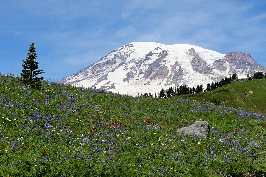 Mt. Rainier Wildflowers - 2 by Christy Pooschke