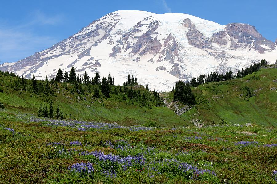 Mt. Rainier Wildflowers by Christy Pooschke