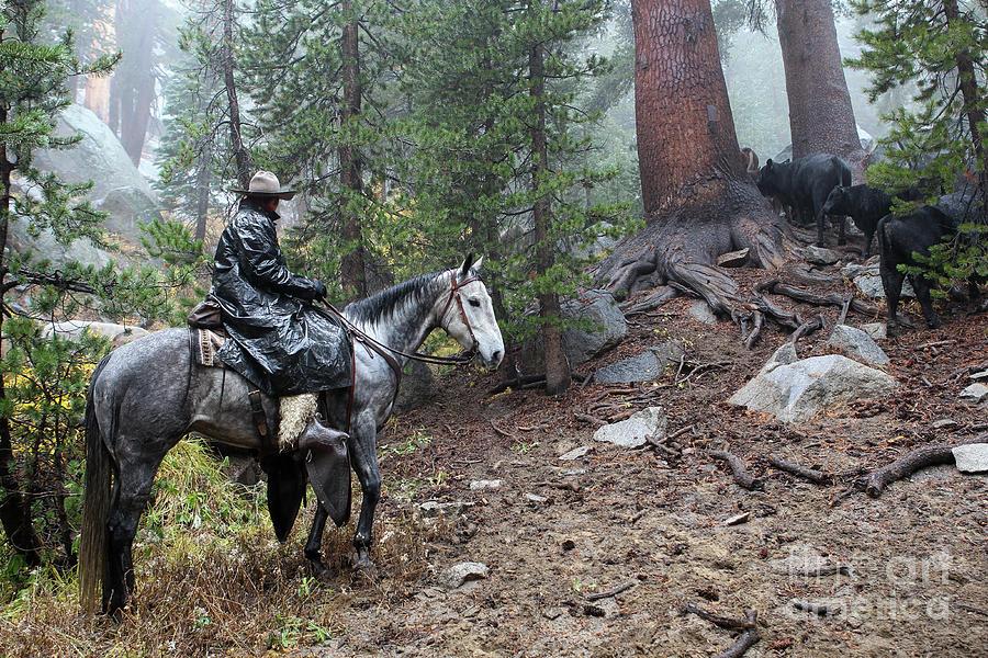 Mud Riding by Diane Bohna