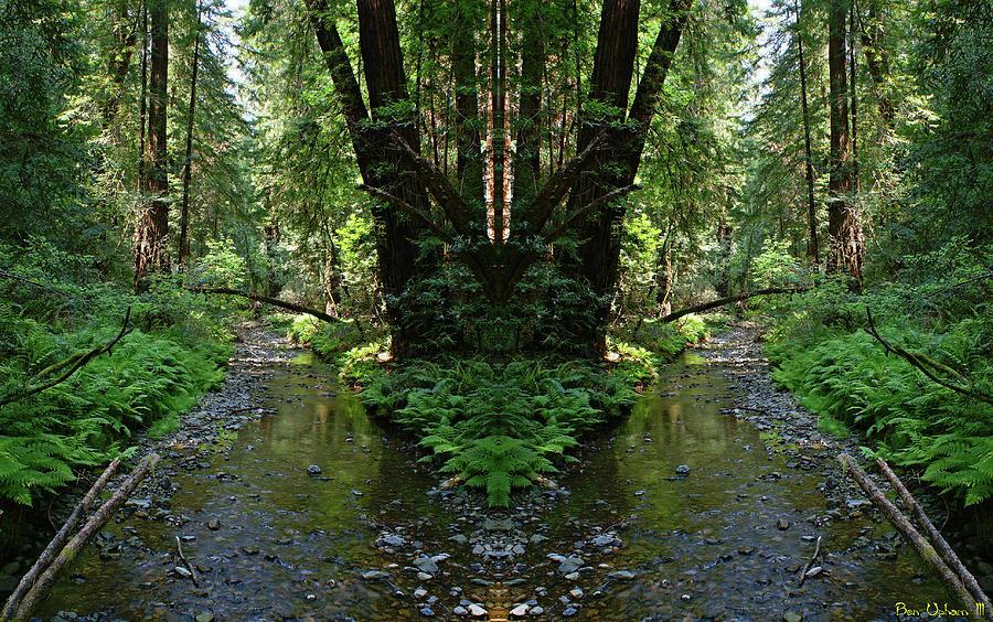 Muir Woods Mirror #1 by Ben Upham III