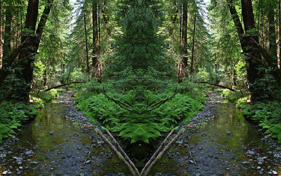 Muir Woods Mirror #2 by Ben Upham III