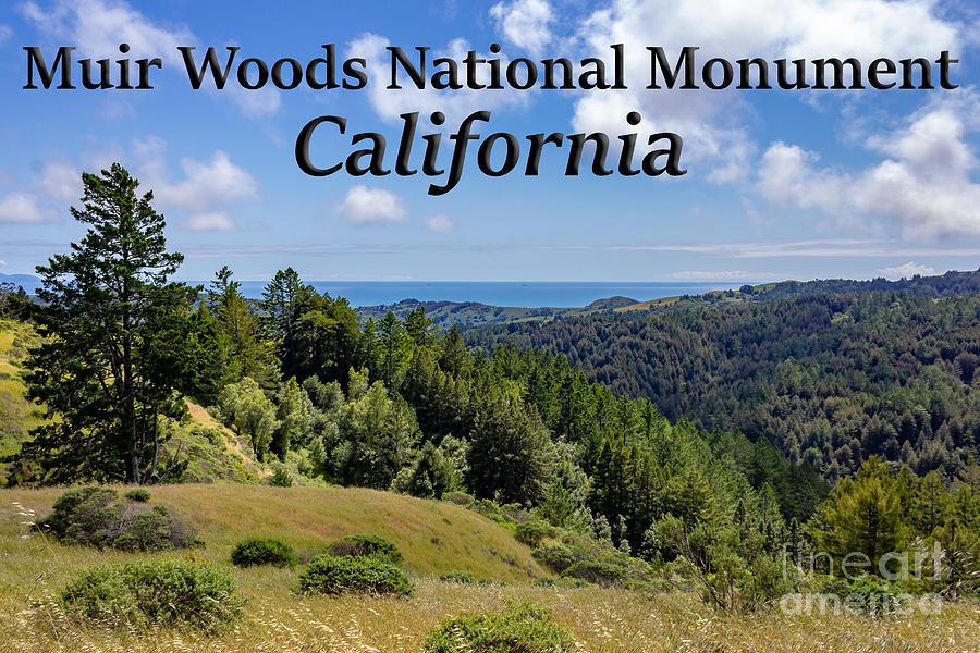 Muir Woods National Monument Photograph - Muir Woods National Monument California by G Matthew Laughton