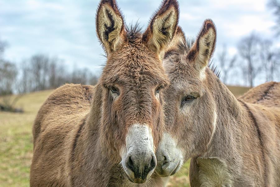 Mule Buddies by Douglas Wielfaert