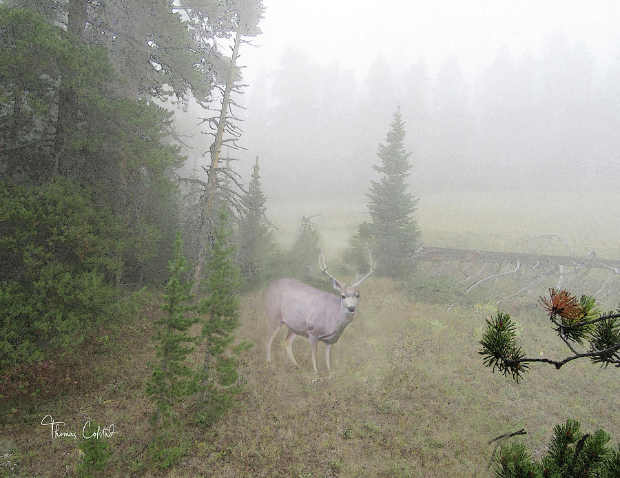 Mule Deer in the Fog by Thomas Colstad