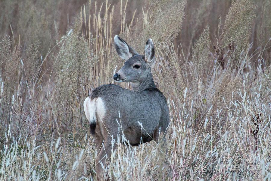 Baby Deer Michael