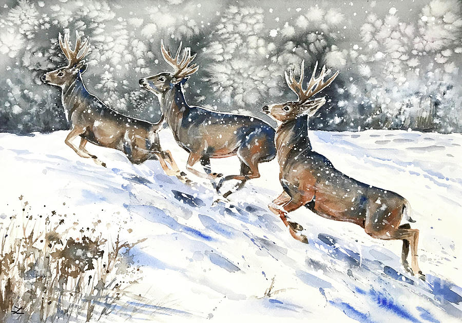 Mule Deer on the Run by Zaira Dzhaubaeva