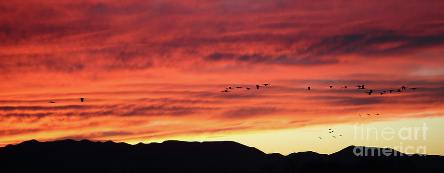 Mule Mountains Sunset by Jean Clark