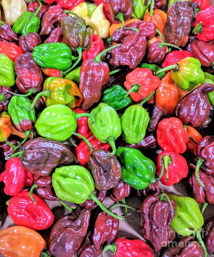 Multi Mini Hot Pepper Variety Photograph by Jane Butera Borgardt