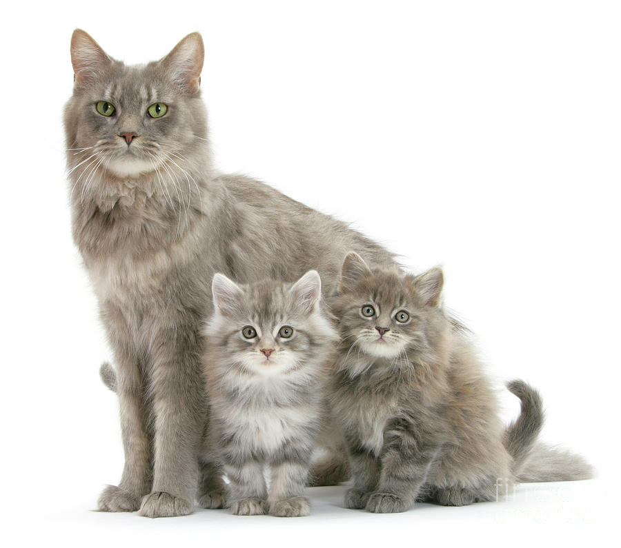 Mum cat and 2 Kits by Warren Photographic