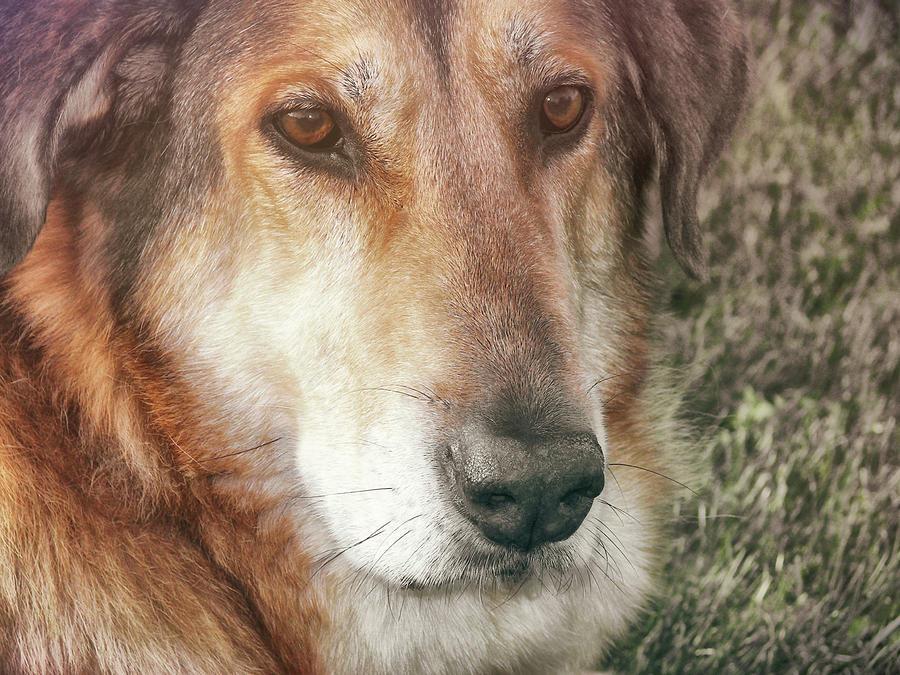 Dog Photograph - Murphy by JAMART Photography