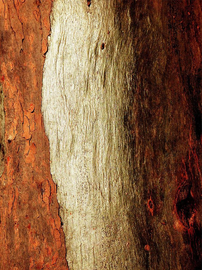 Murray River Gum - Tree Bark 16 by Lexa Harpell