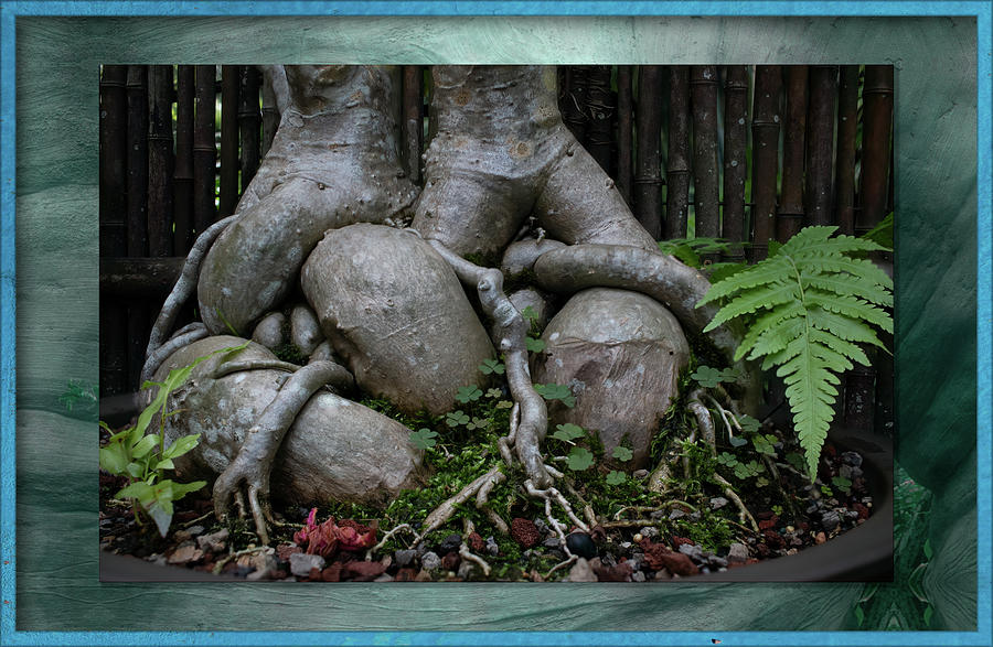 Bonsai Photograph - Muscular Bonsai Roots by Richard Goldman