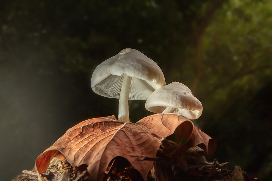 Mushroom Magic by Mary Almond