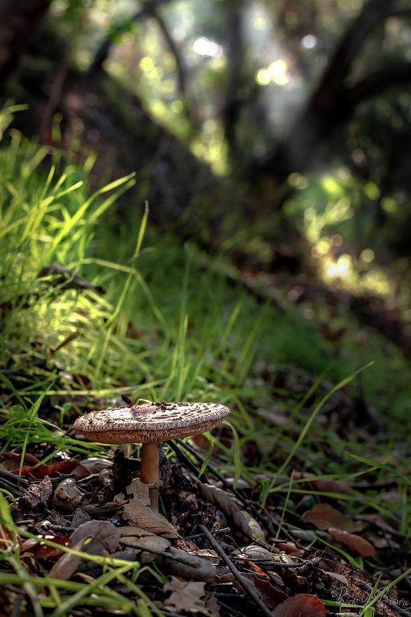 Mushroom by Rick J Brown