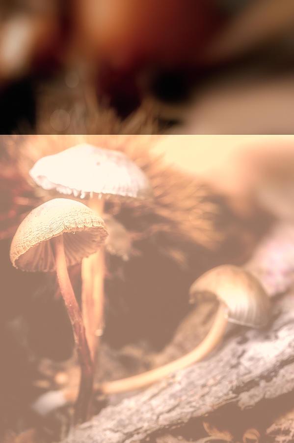 Mushrooms by Roberto Pagani