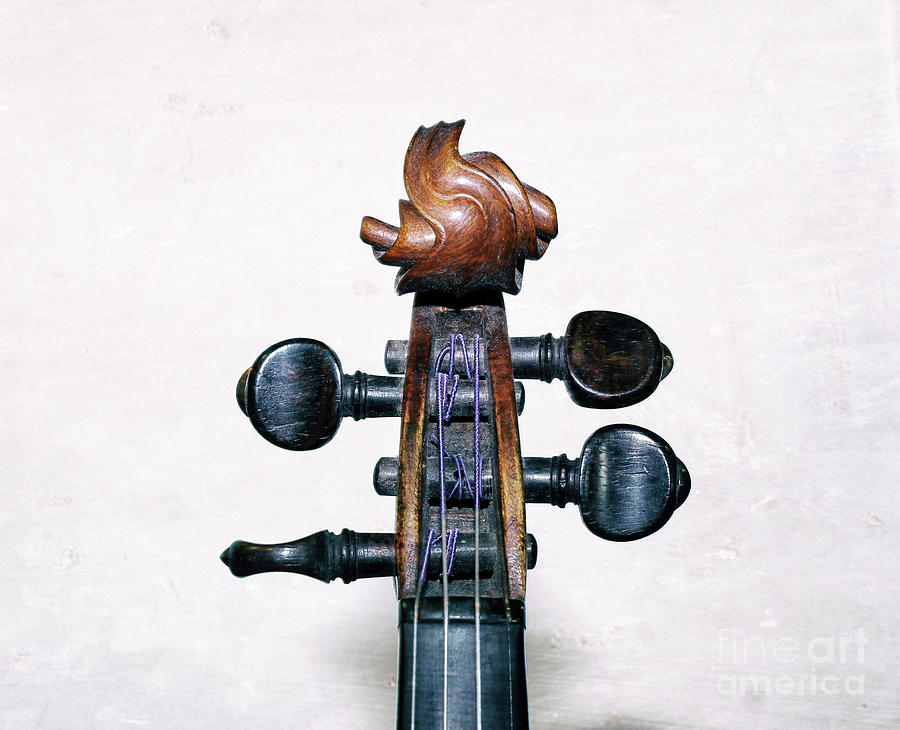 Violin Photograph - Musical Toupee by Steven Digman