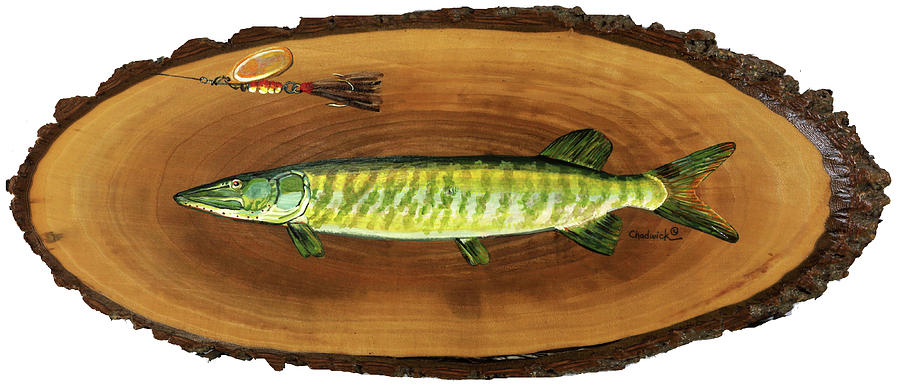 398 Painting - Muskellunge by Phil Chadwick