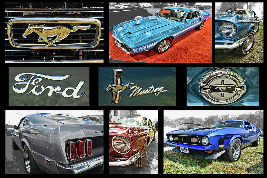 Mustang photo collection by Daniel Adams