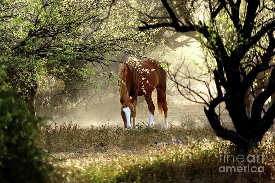 Mustang's Secret Garden by Barbara Sophia Travels