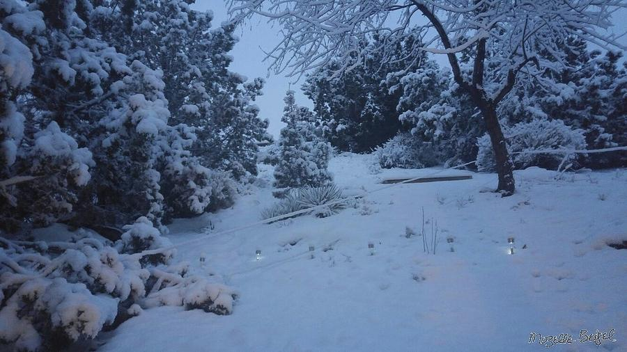 My Colorado Backyard by Mozelle Martin
