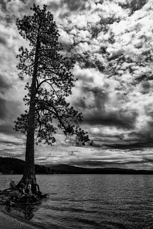 My Favorite Tree Black and White by Matthew Nelson